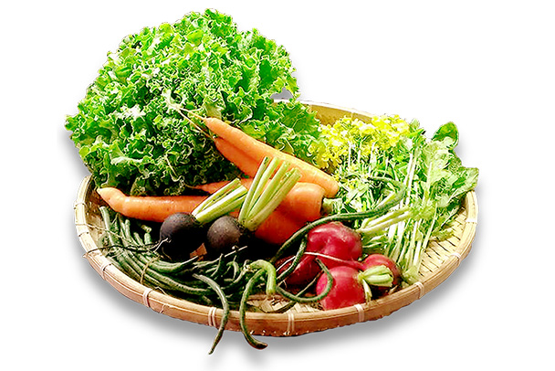 自然栽培 旬の野菜 お楽しみセット
